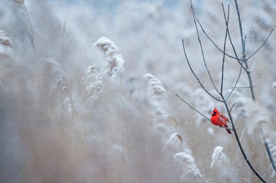 simplest-beauty-snow