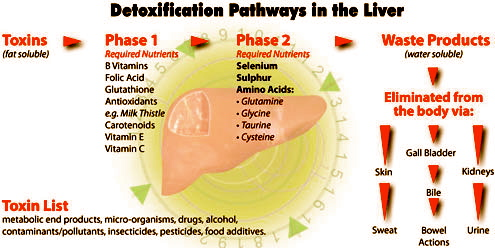 Liver Function and Cleansing