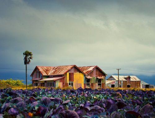 colorful-farm-%e2%96%bacubagallery