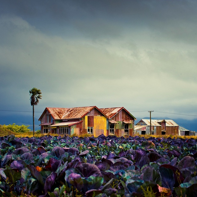 colorful-farm-%e2%96%bacubagallery