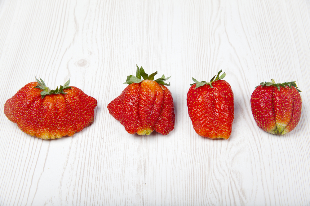 Ugly Fruit Strawberries