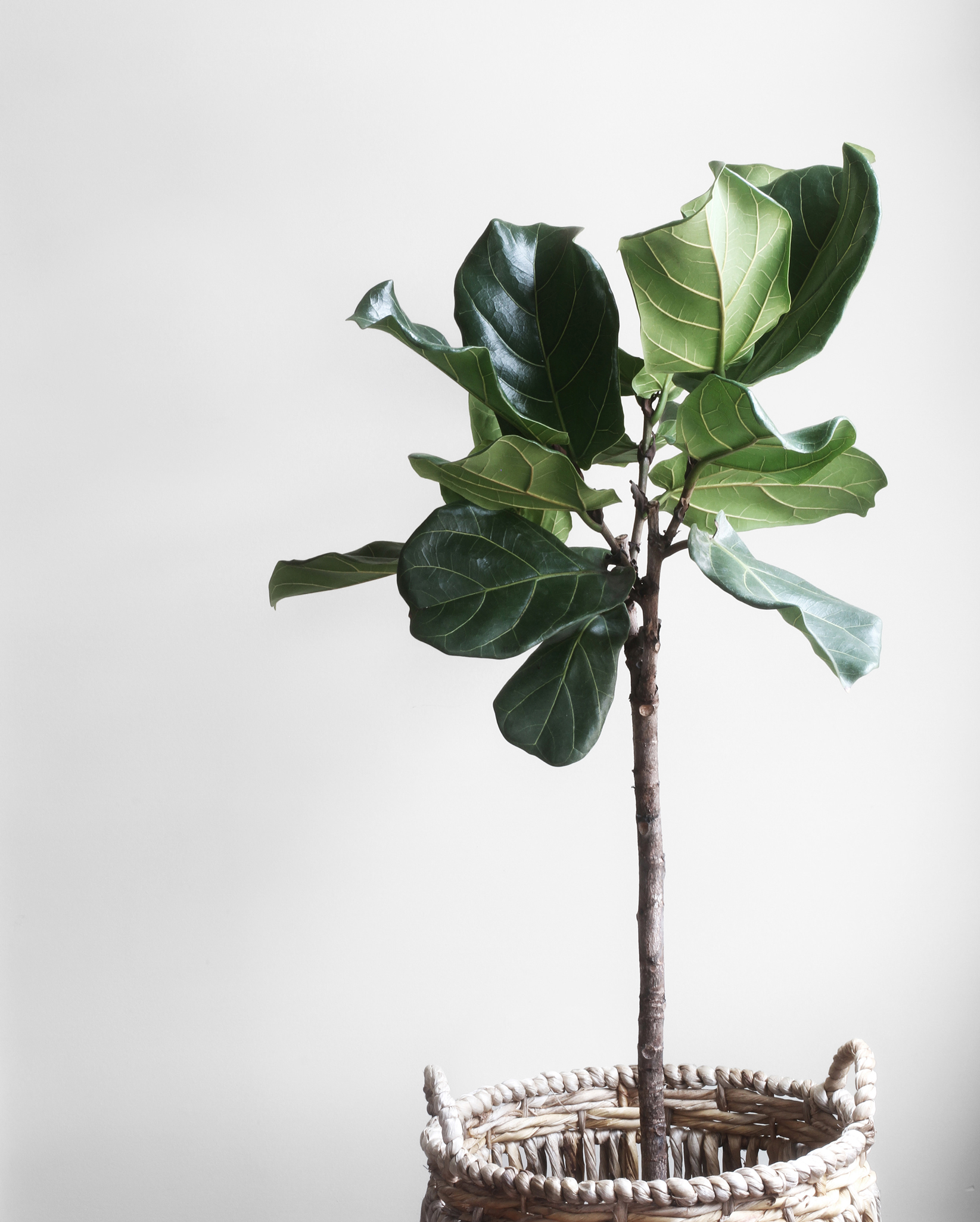 House-plants-for-clean-home-air