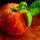 Master Liver/Gallbladder Flush