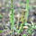 Growing Asparagus!
